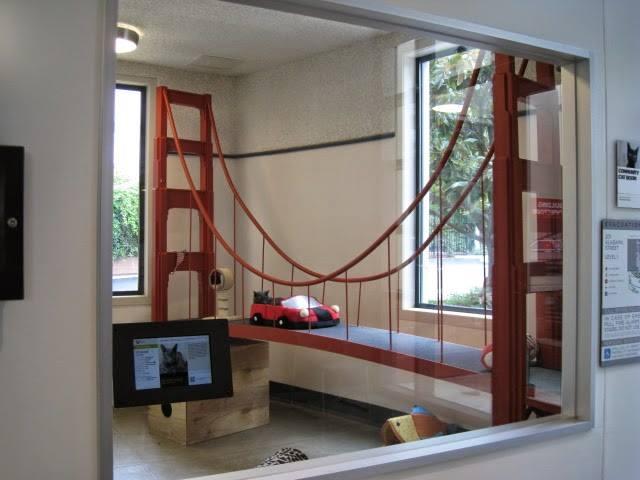 シェルターの保護猫の展示室。
