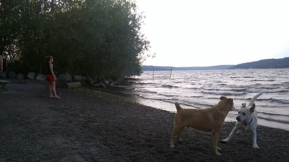 11066シアトルのドッグパーク(湖に面していて、自由に遊べるそうです)