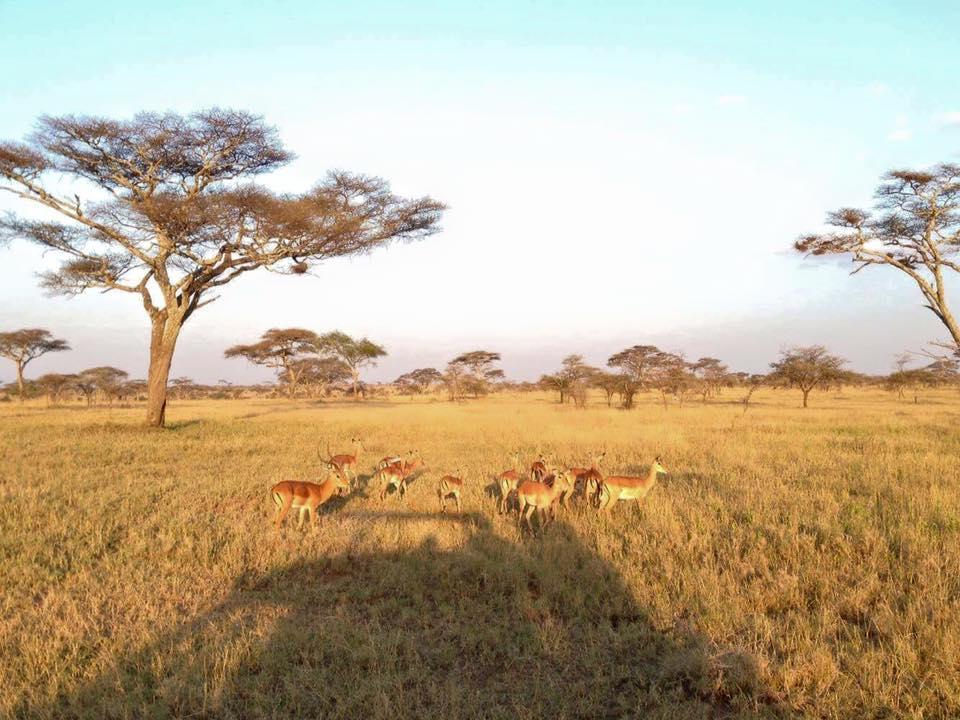 アフリカ滞在中に訪れたサファリ。